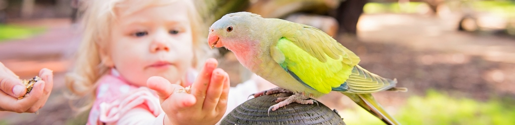 We have a variety of native and exotic birds!